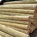 Extra Strong Bamboo Plant Support Garden Canes - 4ft x 150 (12-14...