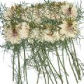 Dried Flowers Pressed Real Dried Flowers, Natural Flower 2 Packs ...